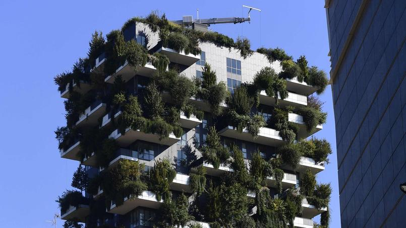 jardins végétalisés béton construction architecture
